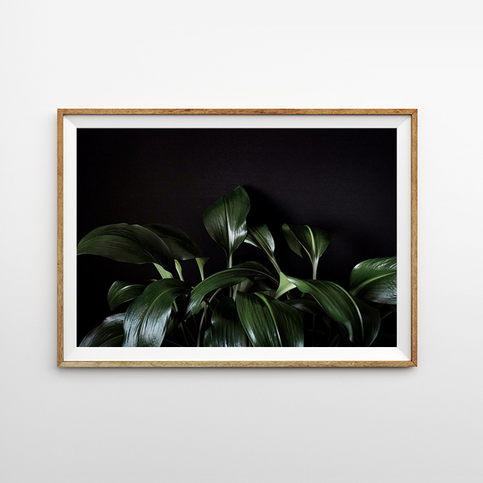 画像1: GREEN LEAVE ギボウシズイ ユーカリス 植物ポスター (1)