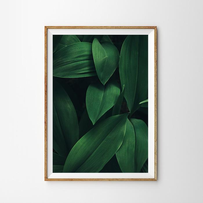 画像1: DEEP GREEN 葉 植物おしゃれポスター (1)